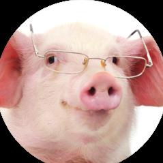 Public Relations Pig